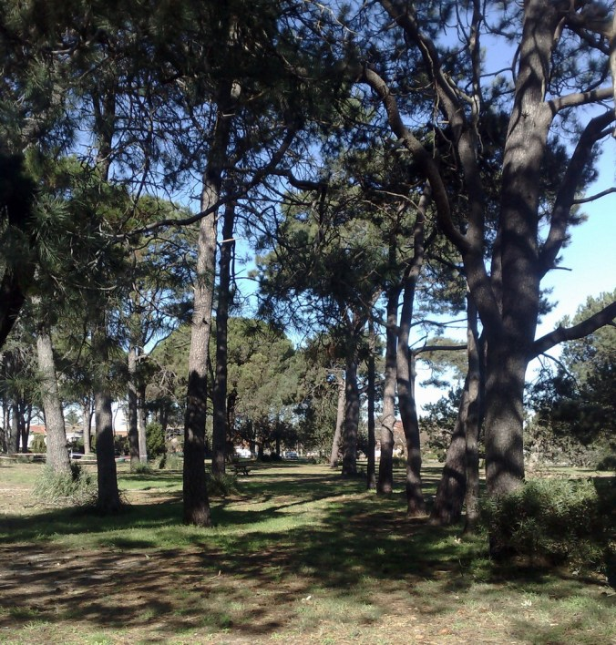 tree arch 1