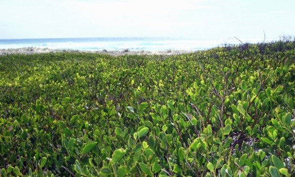 vegetation along the edge of the coastline