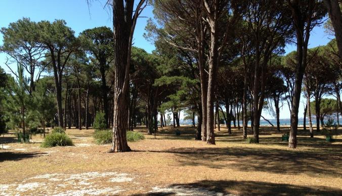 Pine Park Secret Forest