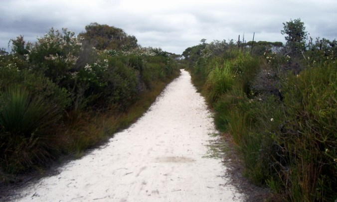 coastal heath